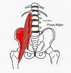 Simple exercises to release the Psoas muscles