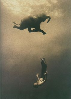 Elephant and man swimming...something about this picture, I just LOVE.