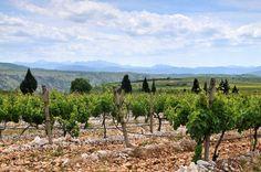 Vineyard near Međugorje in Hercegovina. Image by Thomas Stankiewicz / LOOK-foto / Getty