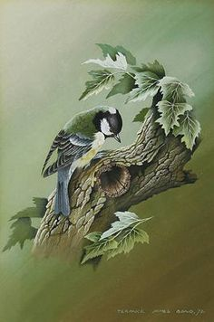 http://www.amazon.co.uk/Birds-Paintings-Terance-James-Bond/dp/0718826825      http://www.bri...