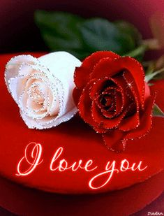 i love you images Flowers Gif, Beautiful Rose Flowers, Beautiful Love, Love Flowers, I Love You Pictures, Love You Gif, Love Images, My Love, Love Wallpaper