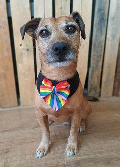 Rainbow pride Dog Bandana