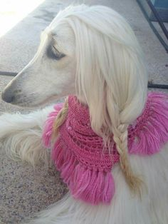 best images, photos and pictures ideas about afghan hound dog - oldest dog breeds Afghan Hound Puppy, Hound Dog, Fox Dog, Dog Cat, Saarloos, Photo Animaliere, Most Beautiful Dogs, Cute Dog Photos, Old Dogs