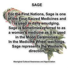 Native Medicine - Sage