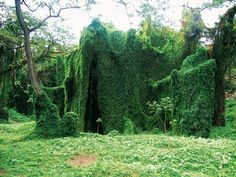 Completely shrouded in foliage (i.imgur.com) submitted by MattCloudy to /r/CozyPlaces 0 comments original   - Architecture and Home Decor - Buildings - Bedrooms - Bathrooms - Kitchen And Living Room Interior Design Decorating Ideas - #architecture #design #interiordesign #diy #homedesign #architect #homedecor #realestate #contemporaryart #decor #decoration