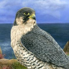 Wildlife Paintings by Carl Whitfield.