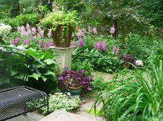 Summer solstice in the shade.  Purple oxalis in a pot & astilbe w hosta & hydrangea
