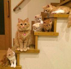 πολεμιστές γάτες dating παιχνίδια