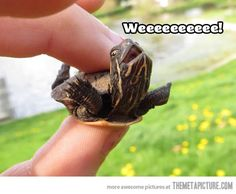 Happy baby turtle is happy…