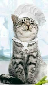 Resultado de imagem para cat with chef hat