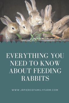 If you're thinking about raising rabbits, these helpful tips will teach you how to feed them. Raising Rabbits, Raising Backyard Chickens, First Aid Tips, Most Common, Types Of Animals, Hobby Farms, Medical Care, Thing 1 Thing 2, Livestock