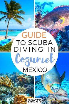 Cozumel Scuba Diving, Best Scuba Diving, Snorkeling, Thailand Adventure, Thailand Travel, Adventure Travel, Adventure Awaits, Cozumel Mexico, Mexico Resorts