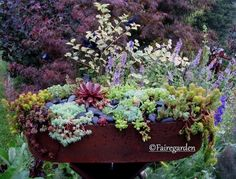 wonderful container in Christopher Mello's garden (via fairegarden) by selena