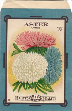 free printable seed packets | Free Printable ~ Antique Aster Seed Packet