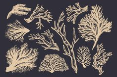 Coral & Seaweed Drawings & Patterns Graphics Hand-drawn coral and seaweed, reminiscent of vintage botanical artwork. Tiling patterns and sample l by Feanne Coral Drawing, Wave Drawing, Nature Drawing, Pencil Illustration, Graphic Illustration, Botanical Illustration, Mermaid Stories, Graphic Design Software, Realistic Drawings