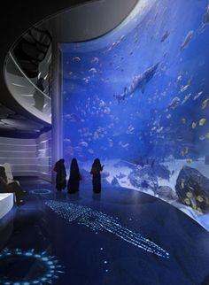 KAFD Aquarium Exhibits