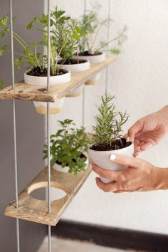 Ideas Regarding DIY Backyard Organizers #backyard #backyardlandscaping #diybackyardideas - If you have a free weekend and you want to utilize it in bringing some change to your backyard or organize it well so that it looks neat and pretty th... Hanging Herbs, Diy Hanging, Hanging Herb Gardens, Diy Herb Garden, Home And Garden, Herbs Garden, Herb Garden In Kitchen, Kitchen Gardening, Garden Kids