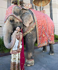 This Indian bride has a laugh with her elephant before the wedding reception. Elephants are important symbols for Hindu weddings. Ganesh, Elefante Hindu, Wedding Gowns Online, Elephant Love, Elephant India, Indian Elephant, Amazing India, Cute Photos, Sri Lanka