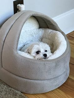 Very busy being cozy! #maltese
