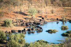 Victoria Falls Safari Lodge in Simbabwe