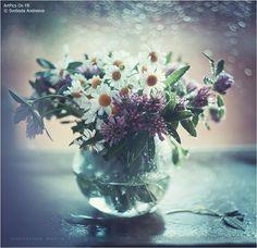 © Svoboda Andreeva  http://facebook.com/ArtPics.tv — at ArtPics.tv.