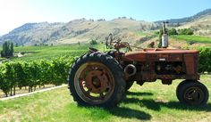 tractor from road 13 vineyard.  oliver, okanagan valley, BC, canada.