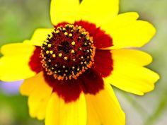 Bloom of the Week Wednesday: June 6, 2012