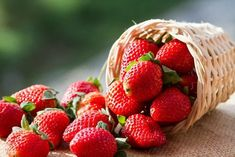 Smoothies are not only yummy, but they can be beneficial for your health as well when made with the right ingredients. From fruit smoothies to green smoothies, there are many ways to make smoothies… Strawberry Leaves, Strawberry Plants, Grow Strawberries, Strawberry Juice, Strawberry Health Benefits, Alkaline Foods, Weight Loss Snacks, Fat Burning Foods, C'est Bon