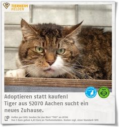13 Jahre ist Tiger schon alt und wartet im Tierheim Aachen.  http://www.tierheimhelden.de/katze/tierheim-aachen/ekh_getigert/tiger/11023-1/  Tiger ist noch etwas zurückhaltend. Er könnte in Wohnungshaltung vermittelt werden, ist aber auch gerne an der frischen Luft.