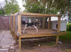 pictures of above ground dog kennels