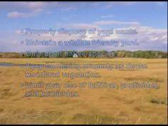Coastal Ecology | What is a Salt Marsh? | by USFWS | 6 min