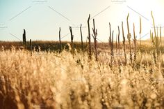Field of Dreams by BrightSpace on @creativemarket