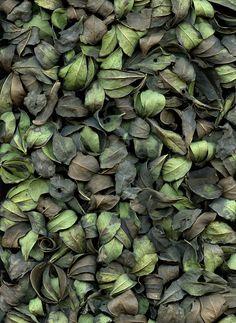 Dried Bush Leaves