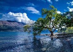 Drzewo, Brzeg, Jezioro, Góry