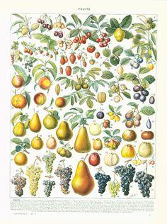 """Colored antique print taken from the """"Encyclopédie Larousse"""", Paris, France…"""