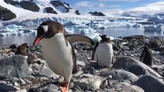 Apple rounded up iPhone users' best videos for new ad campaign Apple Commercial, Penguin Videos, Ios, Cute Penguins, Tv Commercials, Stunts, Apple Tv, Make You Smile, Vignettes