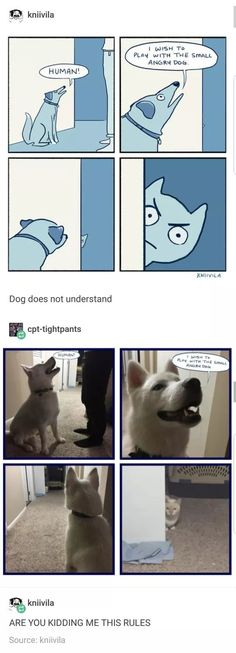 45 ideas funny anime memes lol animal pictures for 2019 Cute Funny Animals, Funny Cute, Hilarious, Super Funny, Animal Pictures, Funny Pictures, Random Pictures, Humor Grafico, Funny Tumblr Posts