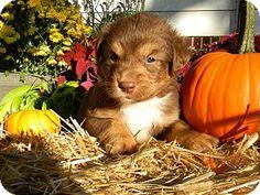 Millersville, MD - Hound (Unknown Type) Mix. Meet River, a puppy for adoption. http://www.adoptapet.com/pet/16946722-millersville-maryland-hound-unknown-type-mix