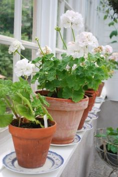 Houseplants That Filter the Air We Breathe Love The Swedish Blue Saucers With The Terracotta Pots Fresh Flowers, Beautiful Flowers, Seasonal Flowers, Terracotta Pots, Porch Decorating, Garden Pots, Houseplants, Beautiful Gardens, Container Gardening