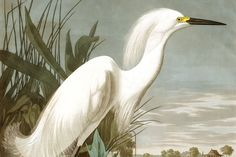 Our Snowy Heron Wallpaper Mural features original artwork by J.J. Audubon and will add a fresh and relaxing vibe to any interior. The earthy tones and muted shades in this wallpaper create a calm feeling that everyone will enjoy when they walk into the room.