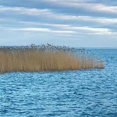 Reeds/Nádas #fivesneakers #wecollectmemories