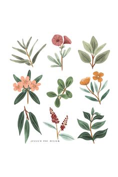 Icons Discover Flower illustration botanical prints drawing This print of botanical flower illustrations would make the perfect the addition to your homes wall decor or make the perfect gift for a friend. Illustration Blume, Botanical Illustration, Botanical Drawings, Botanical Prints, Floral Drawing, Drawing Flowers, Art Flowers, Flowers Garden, Spring Flowers