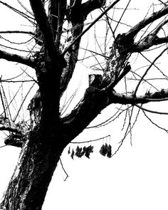 Non si è mai soli  #love #life #nature #blackandwhite #bnw #monochrome #instablackandwhite #monoart #insta_bw #bnw_society #bw_lover #bw_photooftheday #photooftheday #bw #instagood #bw_society #bw_crew #bwwednesday #insta_pick_bw #bwstyles_gf #irox_bw #igersbnw #bwstyleoftheday #monotone #monochromatic#noir #fineart_photobw