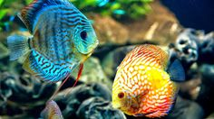 Image result for coral reef fish