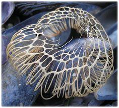 fossil exoskeleton of marina caterpillar (unidentified species)  Image hosting by Photobucket