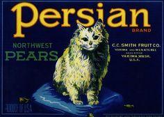 Yakima, Washington - Persian Kitten Cat Pear Fruit Crate Box Label Art Print