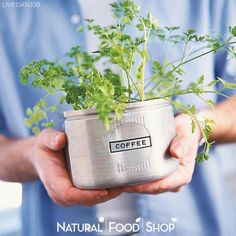 What's better than fresh #herbs, picked from your backyard and added directly to your favorite dishes --> http://livedan330.com/2014/02/09/diy-indoor-herb-gardens/