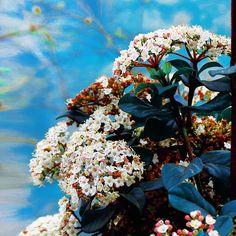 13.4b Takipçi, 593 Takip Edilen, 427 Gönderi - Emine Yıldız'in (@emofopatsii) Instagram fotoğraflarını ve videolarını gör Eminem, Nature Photography, Flowers, Plants, Painting, Instagram, Art, Art Background, Painting Art