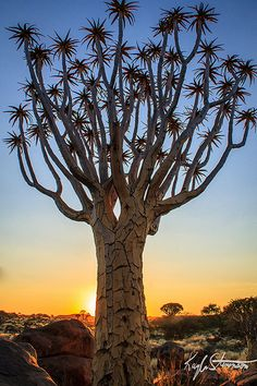 Quiver Tree Forest .