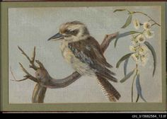 A kookaburra, one of 14 watercolours of South Australian scenes by local artists contained in an album. Loving attention to natural history detail has been made by the artists who created these distinctively South Australian scenes for the children of the visiting Duke and Duchess of York on 11 July 1901. The album and booklet of names is contained within a Blackwood chest, presented by some South Australian families to the visiting Duke and Duchess of York for their children.